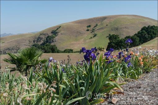 Wide field view