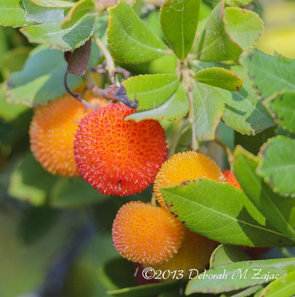 Spiky Berries