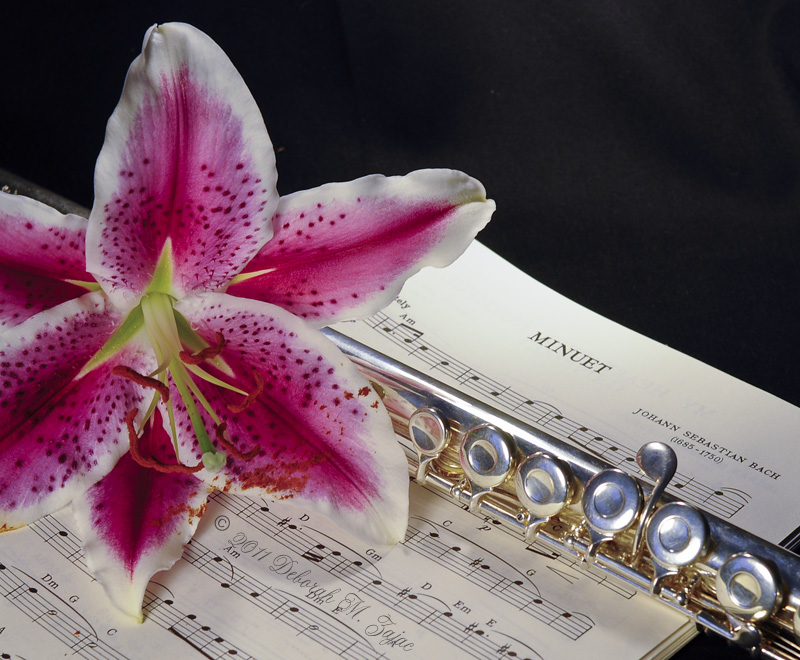 Flute and Stargazer Lily 72 dpi