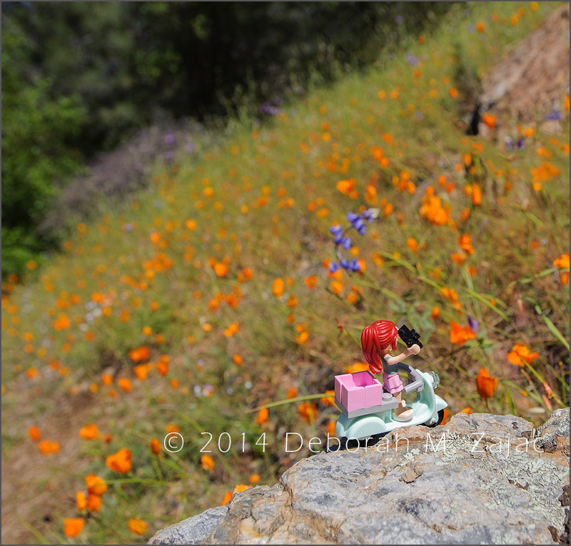 Travelerette and Wildflowers