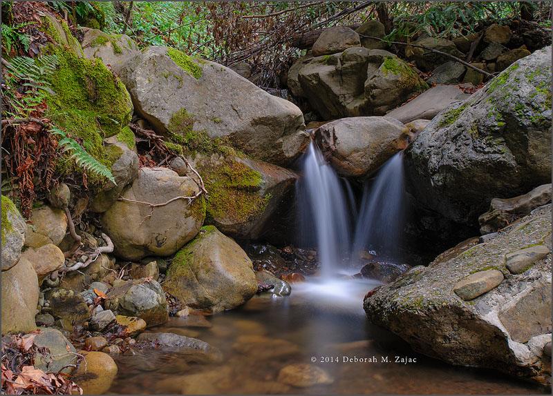 A little Spring Waterfall on Swanson Creek