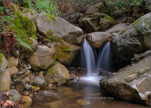 A little Spring Waterfall on Swanson Creek