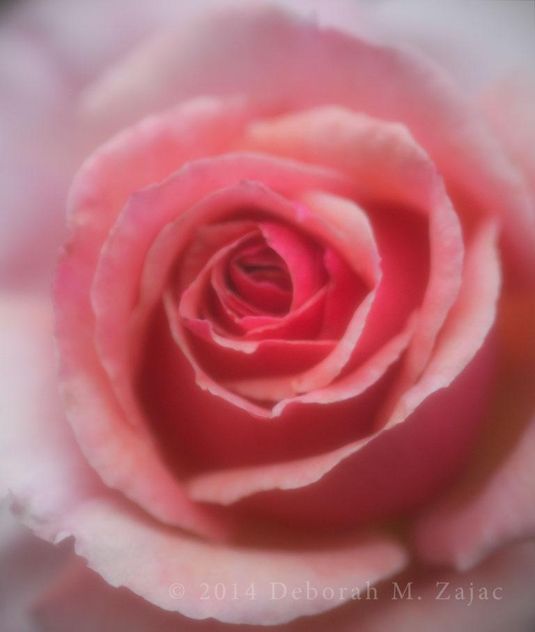 Rose Soft Pink