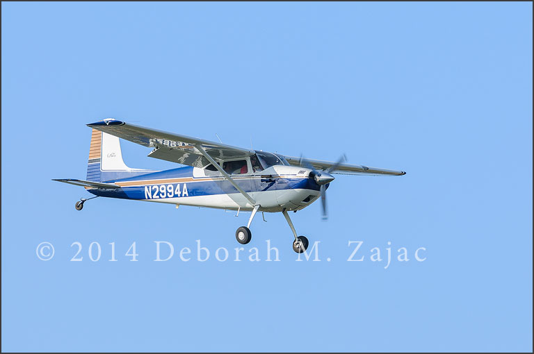 Another kind of Bird-Cessna 180