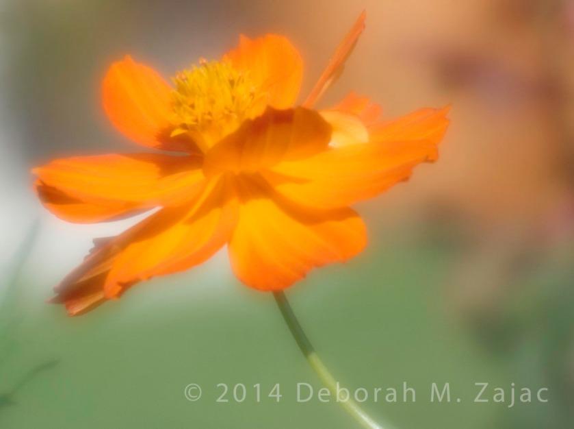 Daisy_0378 v2