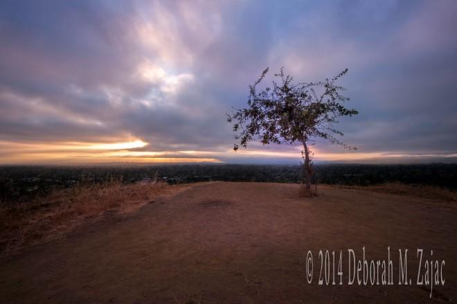 P52 34 of 52 Dawn Santa Clara County