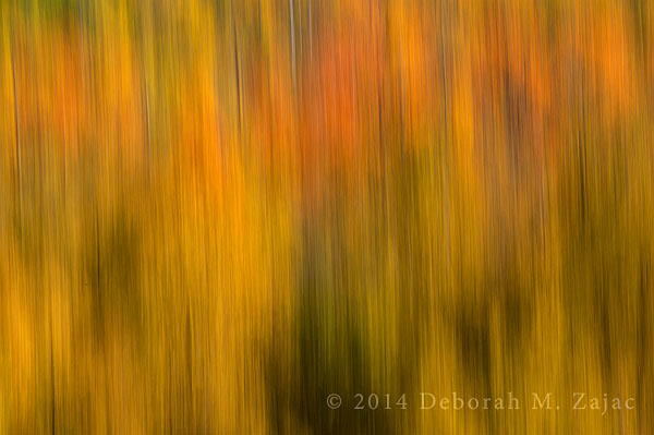 Fall Color ICM Abstract