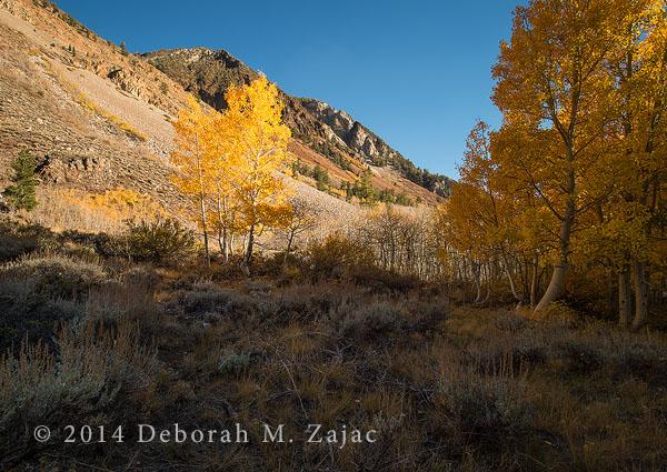 Fall Color Bishop Creek
