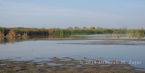 Pond at MErced NWR