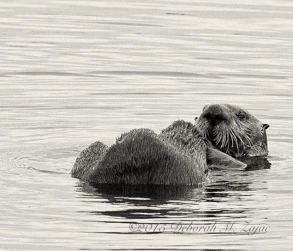MM2-10 Sea Otter
