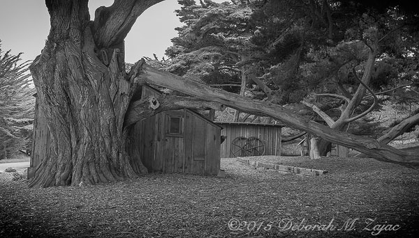 MM2-11 Whaler's Cabin Point Lobos State Park