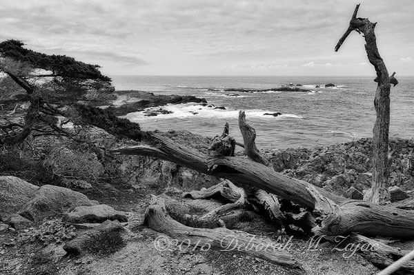 Monochrome Madness 2 14/52  Monterey Bay