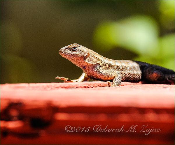 P52 23 of 52 Lizard