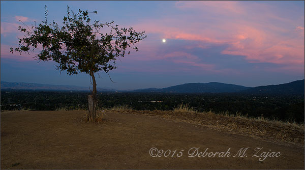 Moonrise from the Lonely Tree