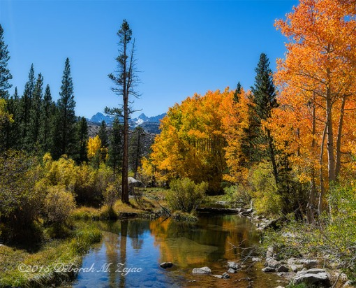 Fall Color in the Eastern Sierras