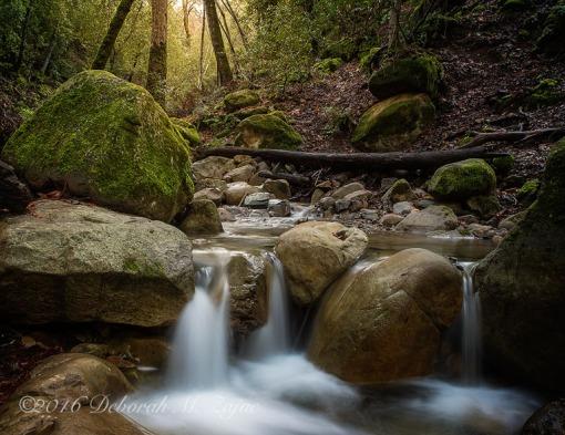 Swanson Creek Cascade