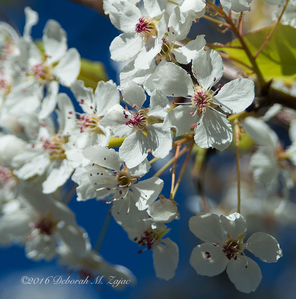Blossoms on a Flowering Tree