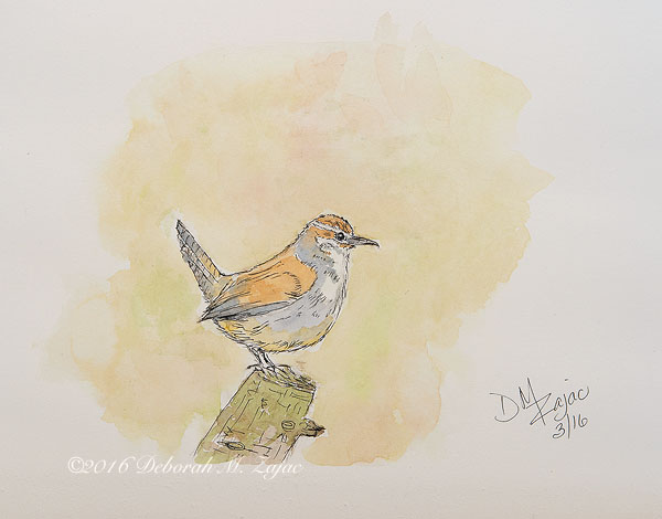 Bewick's Wren Pen and Watercolor Wash
