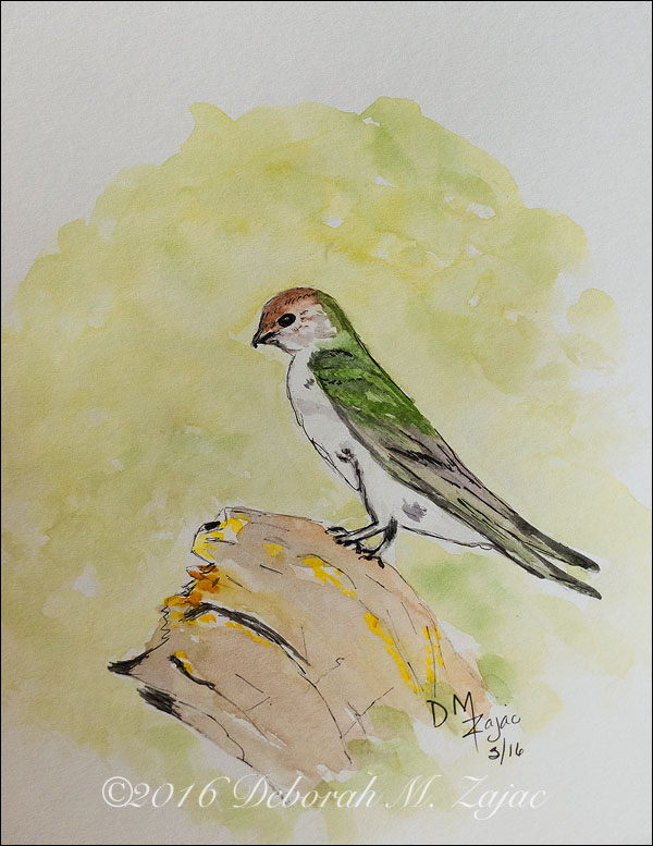 Watercolor Line and Wash Violet-Green Swallow
