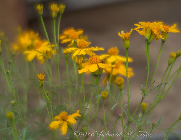 Macro Photography-Flowers-LensBaby
