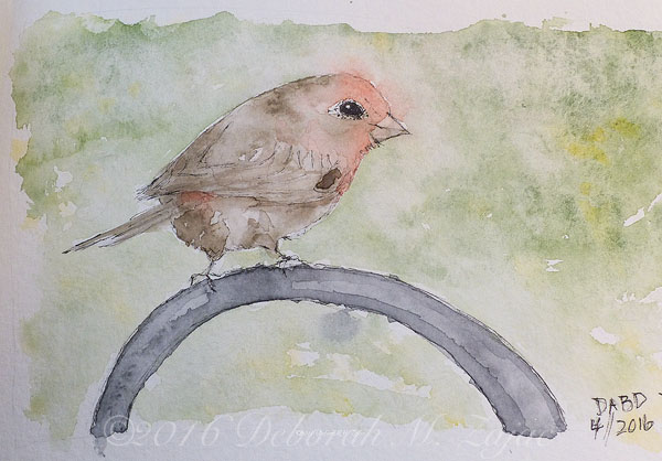 House Finch in Watercolor Draw-a-Bird Day
