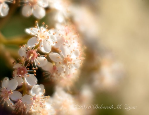 Privacy hedge- macro photography Lensbaby