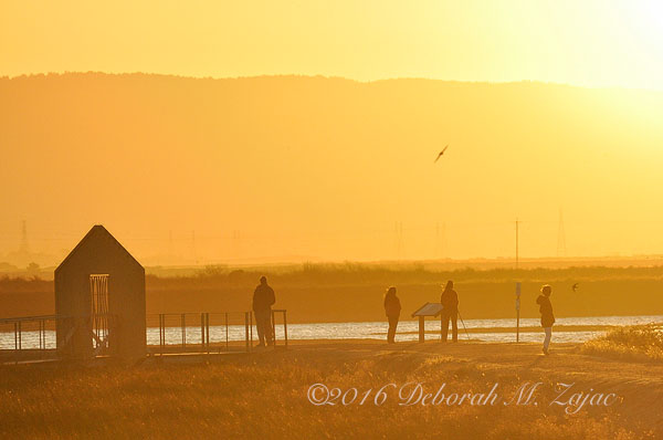 Alviso Golden Hour Fall 2009