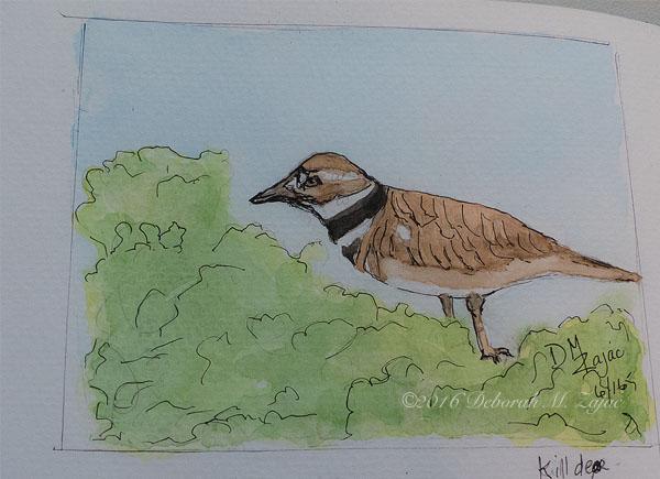 Killdeer in Watercolor