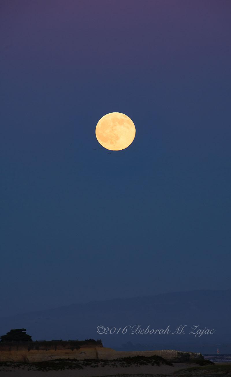 Full Buck Moon Twilight