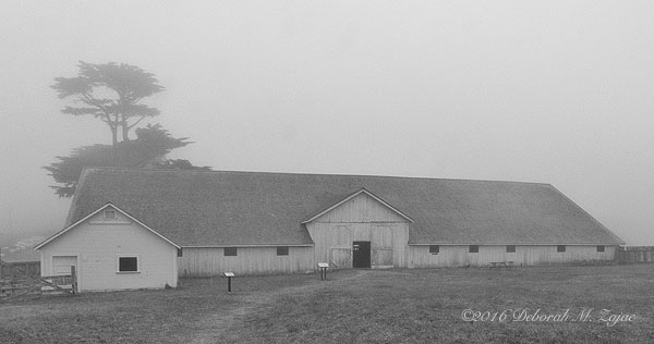 Long Barn Pierce Ranch