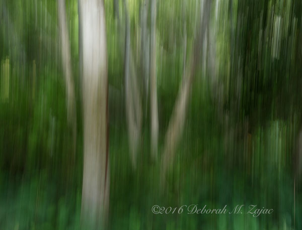 Trees and Foliage Abstract