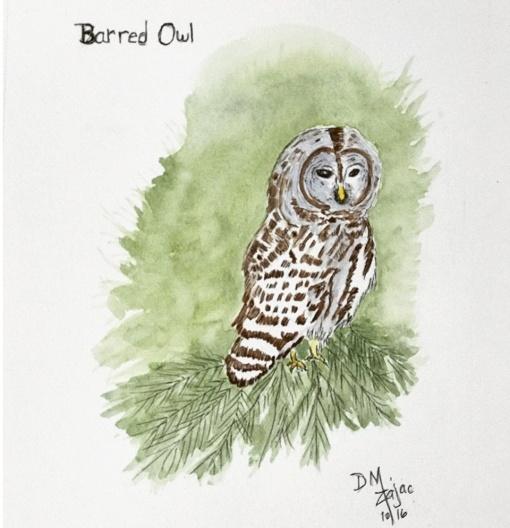 Barred Owl in Watercolor