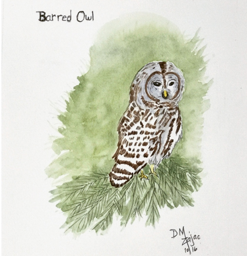 Barred Owl in Watercolor