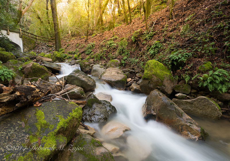 swanson-creek_dmz8788