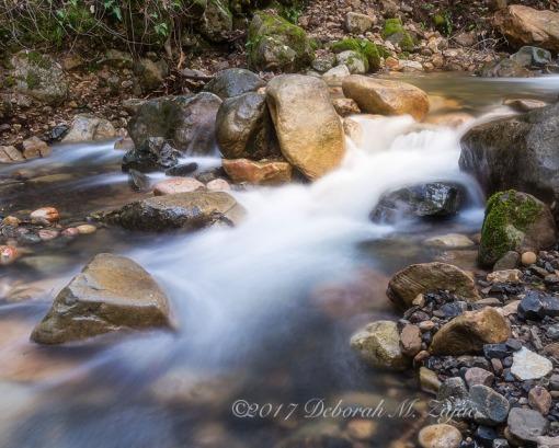 Swanson's Creek