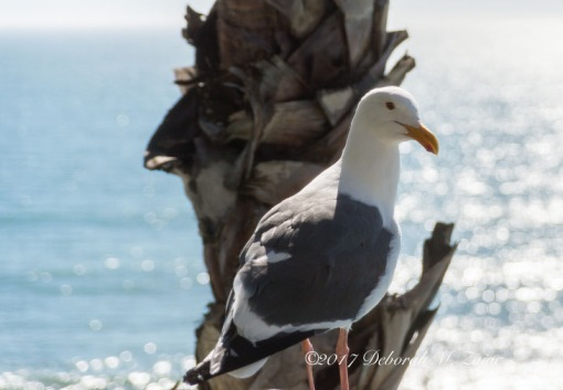 Seagull balcony Rm 315 Shore Cliff Hotel