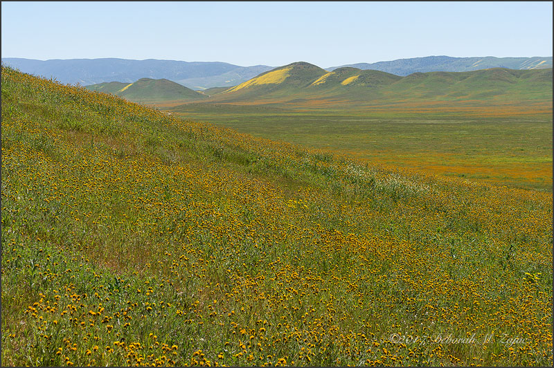 Super Bloom Carrizo Plain