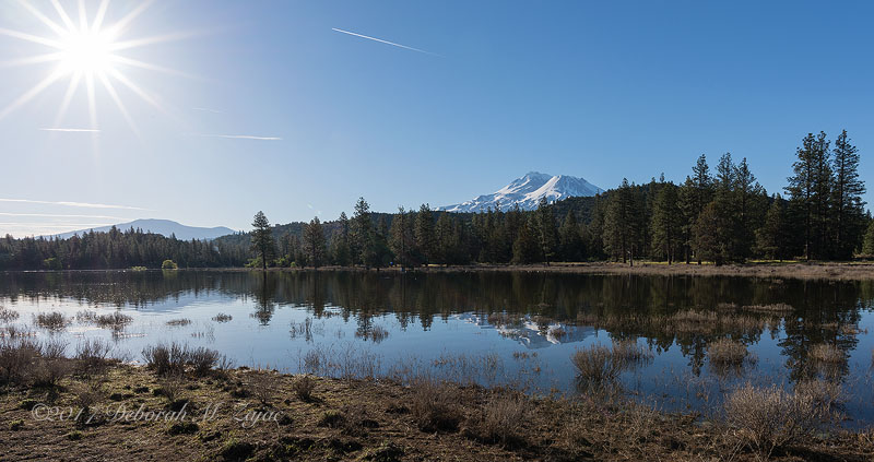 Mt Shasta Reflected