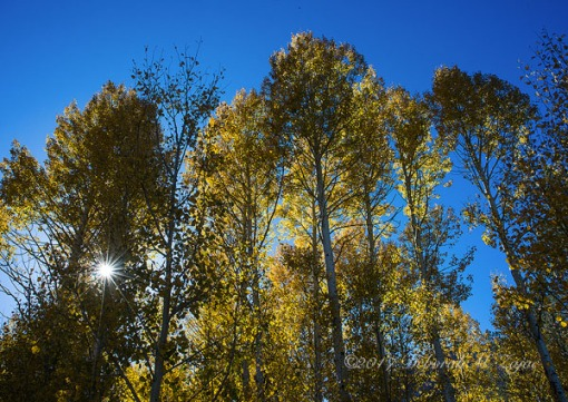 Fall Backlit_100917_4430