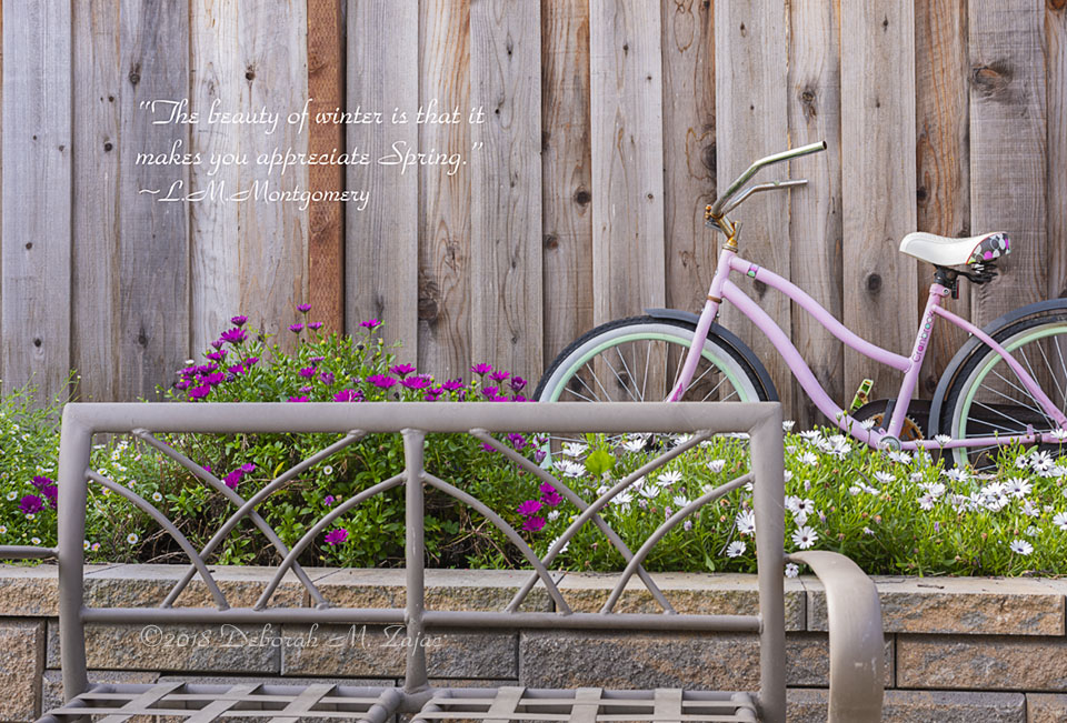 Bicycle among the Flowers