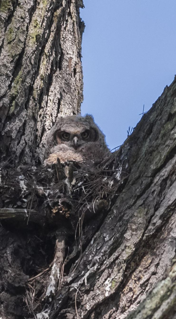 Owlet San Francisco CA_DMZ6629-3