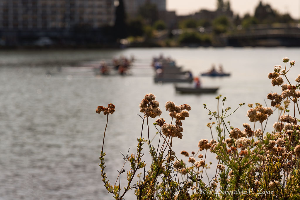 Wildflowers around Lake Merritt