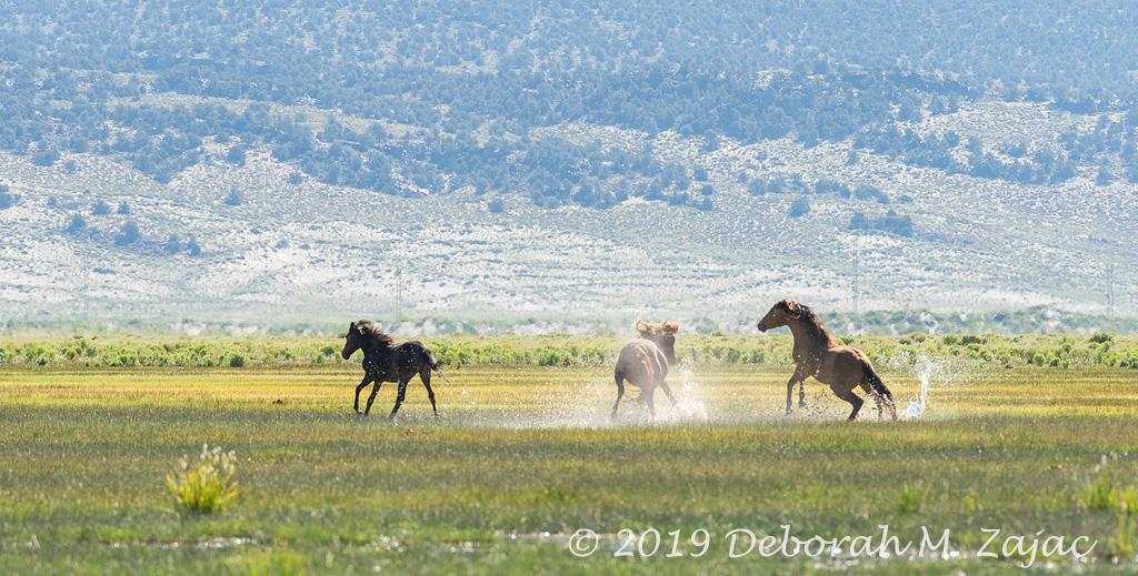 Wild Mustang Skirmish