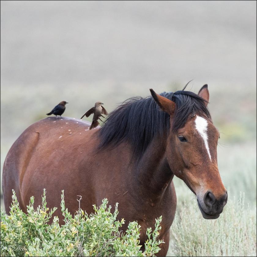 Cowbird Up!_DMZ1318