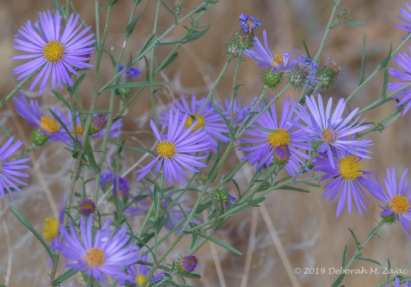 Late Summer Wildflowers