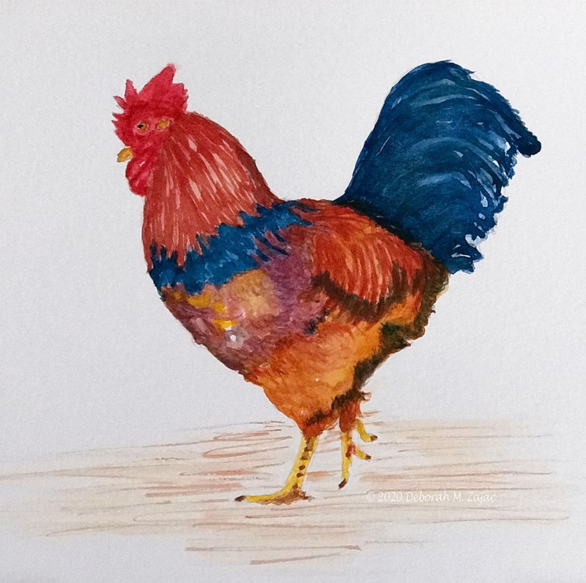 Rooster_198CC240-54E4-4CD1-9795-776A44B43BBA
