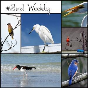 bird_weekly_badge_400 web